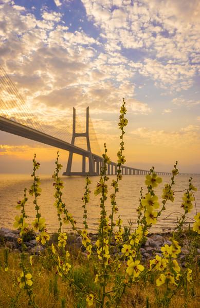 Original Flower Lisbon Bridge Sunrise  Photography By Messagez com