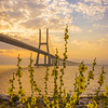 Original Flower Lisbon Bridge Sunrise  Photography By Messagez com