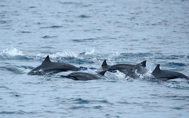 Dolphine in Sri Lanka