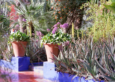 Taken on Analogue Film - Majorelle Gardens, Marrakesh
