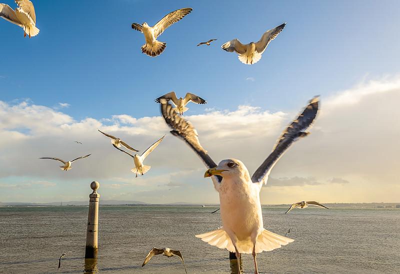 Lisbon Seagulls Synchronicity Fine Art Photography By Messagez com