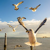 Lisbon Seagulls Synchronicity Fine Art Photography By Messagez com