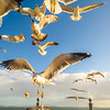 Lisbon Seagulls Synchronicity Fine Art Photography 5 By Messagez com