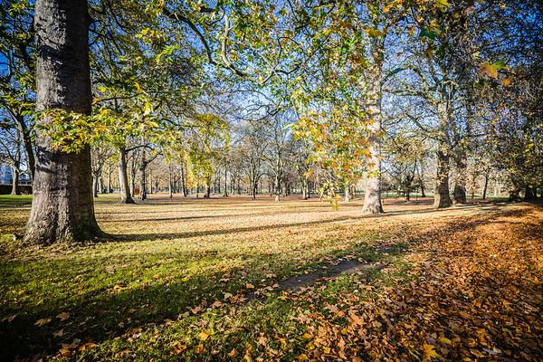 Winter Green Park