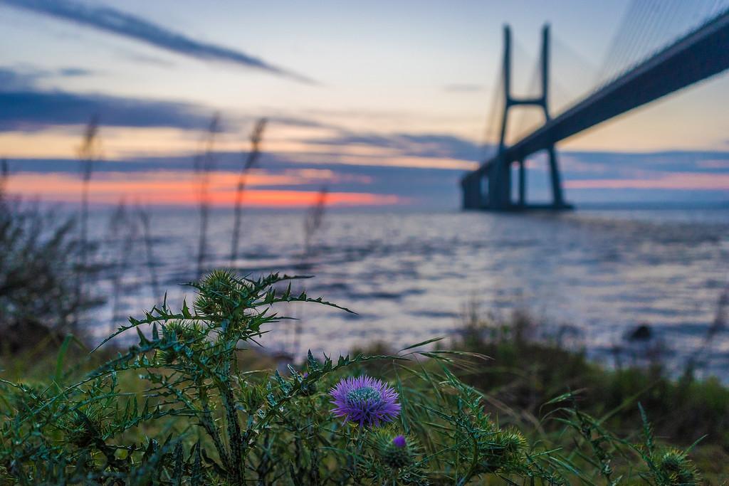 Lisbon Vasco da Gama Bridge at Sunrise Photography 4 By Messagez com