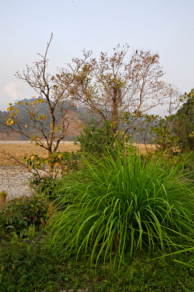 Namdapha tiger reserve in the northeastern Indian state of Arunachal Pradesh