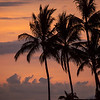 Mexico Palms