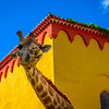 Best of Giraffe Fine Art Photography 2 By Messagez com