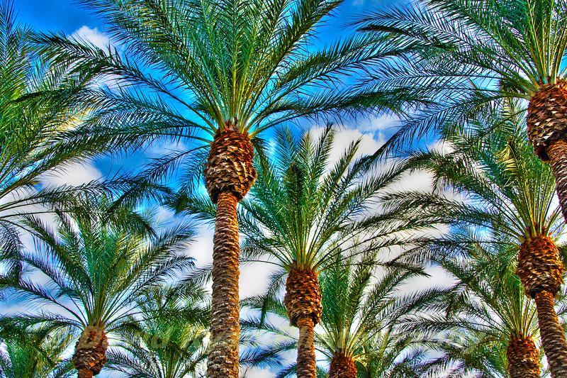 Las Vegas Palms