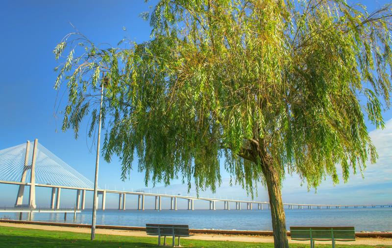 Bridge Tree By Messagez.com