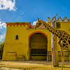 Best of Giraffe Art Photography 7 By Messagez com