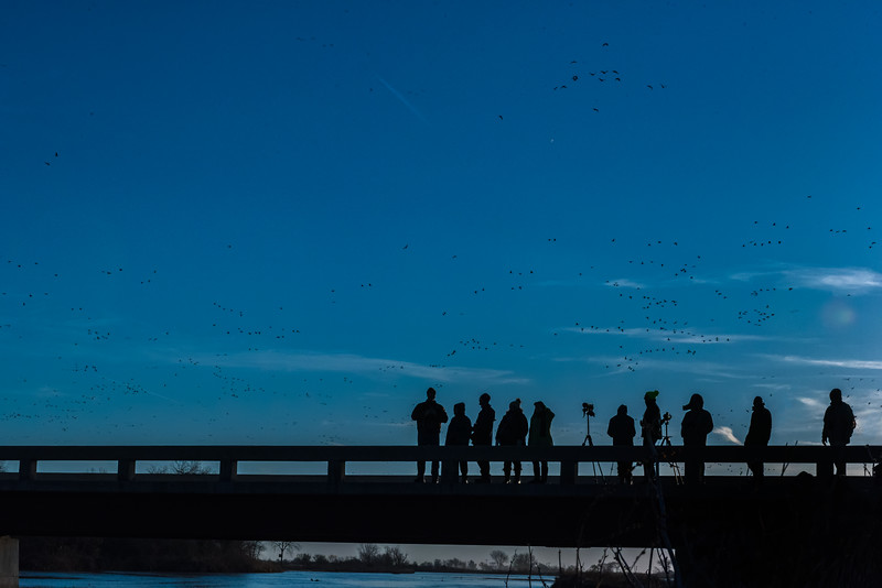 Crane watchers on the Gibbon Bridge, Nebraska