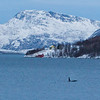 Orca on Kaldfjord