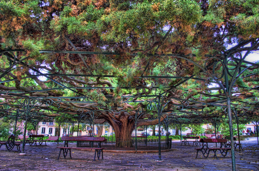 Photo of the biggest tree in lisbon Portugal
