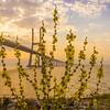 Original Flower Lisbon Bridge Sunrise  Photography 2 By Messagez com