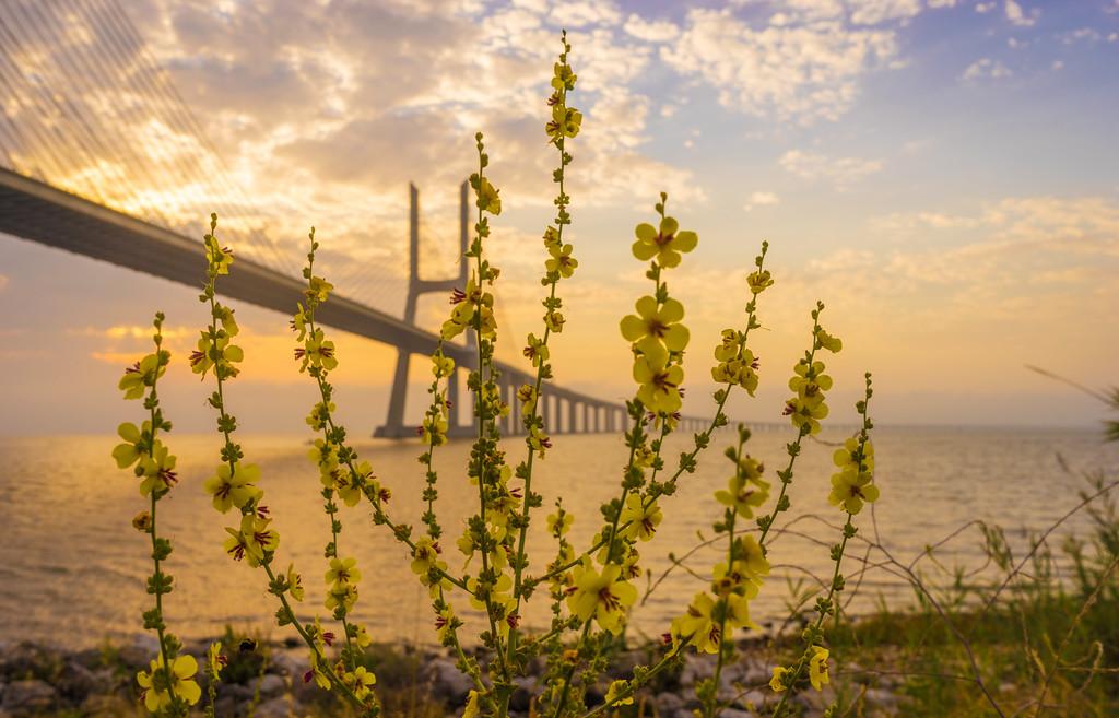 Original Flower Lisbon Bridge Sunrise  Photography 2 By Messagez com