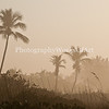Beach Haze