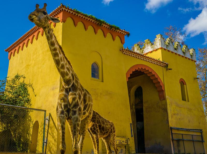 Best of Giraffe Art Photography 5 By Messagez com