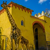 Best of Giraffe Art Photography 5 By Messagez com