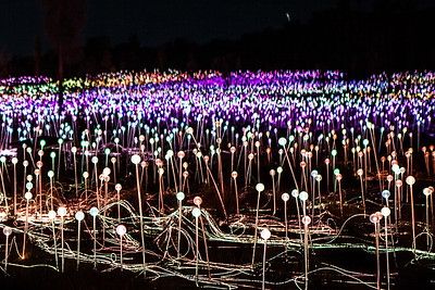 Field of Lights Uluru Northern Territory
