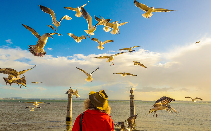 Lisbon Bird Whisperer Fine Art Photograhy 2 By Messagez com