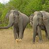 ADS_Sri Lanka_000052736