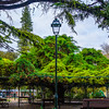 Lisbon Biggest Tree Photography By Messagez com