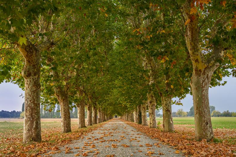 Long tree-lined lane to Tenuta Il Castelletto near Pinerollo, Piedmont Region near Turin, Italy