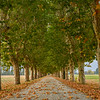 Long tree-lined lane to Tenuta Il Castelletto near Pinerollo, Piedmont Region near Turin, Italy