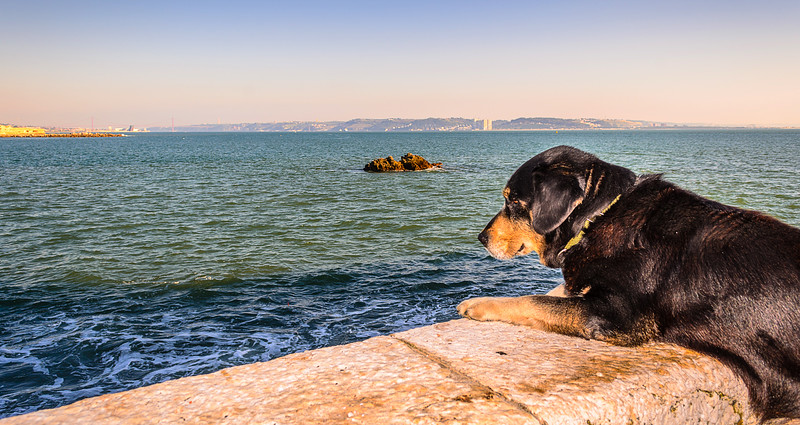 Dog Curiosity Photography By Messagez com