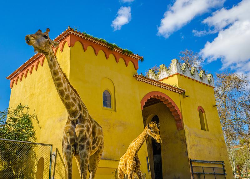 Giraffe World Beauty Photography By Messagez com