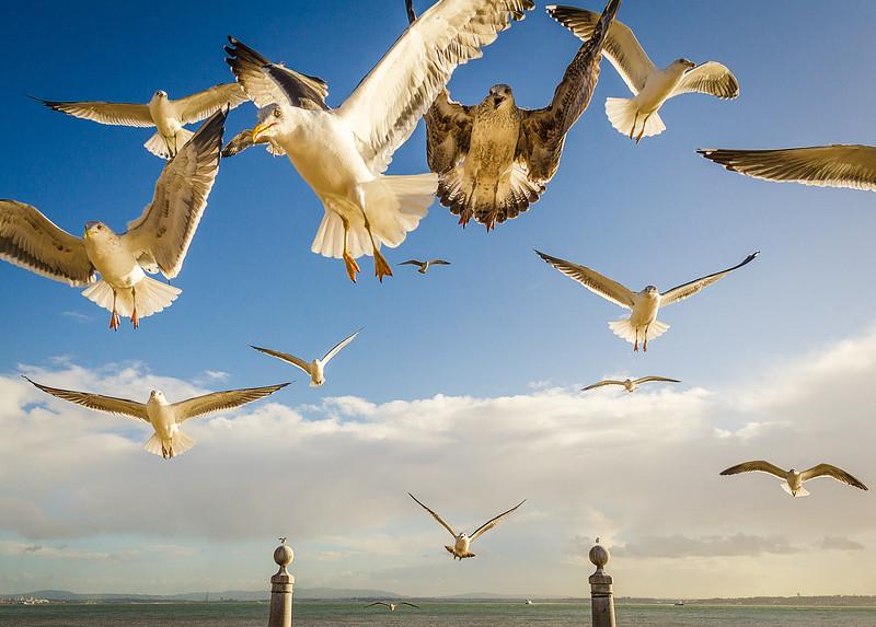 Original Animal Synchronicity Photography 35 By Messagez com