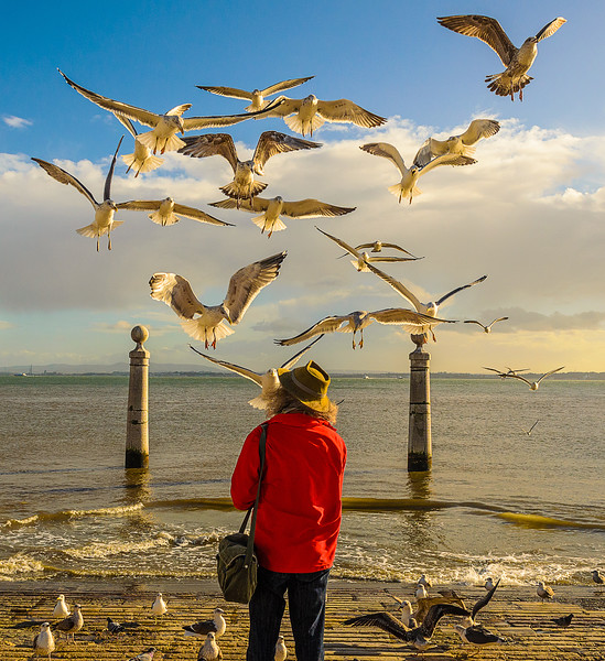 Lisbon Bird Whisperer Fine Art Photograhy 4 By Messagez com