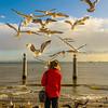 Lisbon Bird Whisperer Fine Art Photograhy 4 By Messagez com