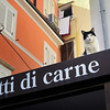 "Cat On a Hot Roof Above a ""Meat Dishes"" Sign in Piran, Slovenia"
