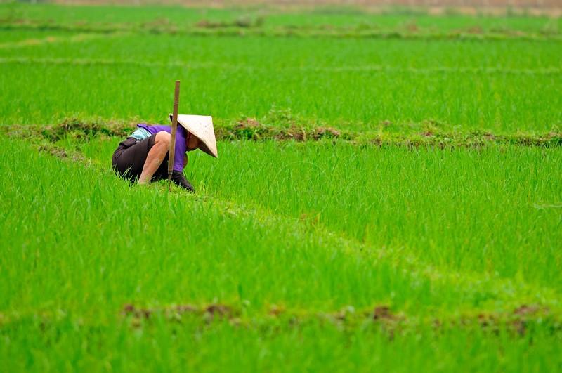 AS_Vietnam_0000010985