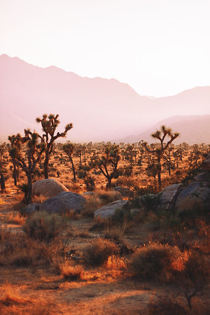 Joshua Tree Haze