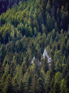 Forest Spires