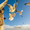 Lisbon Seagulls Synchronicity Fine Art Photography 4 By Messagez com