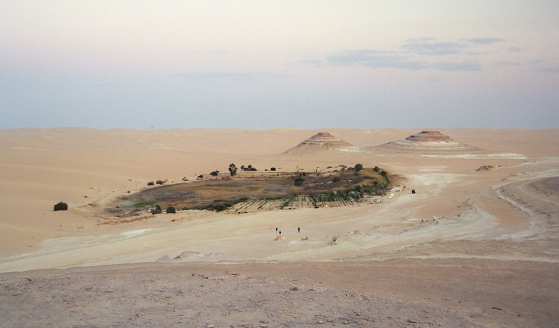 Oasis in the Great Sand Sea