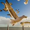 Original Animal Synchronicity Photography 33 By Messagez com