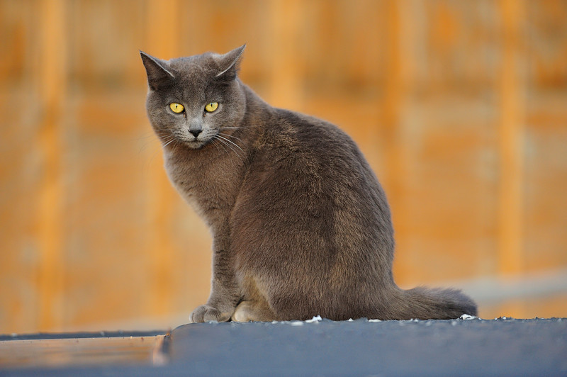 Cat in Santa Fe, New Mexico