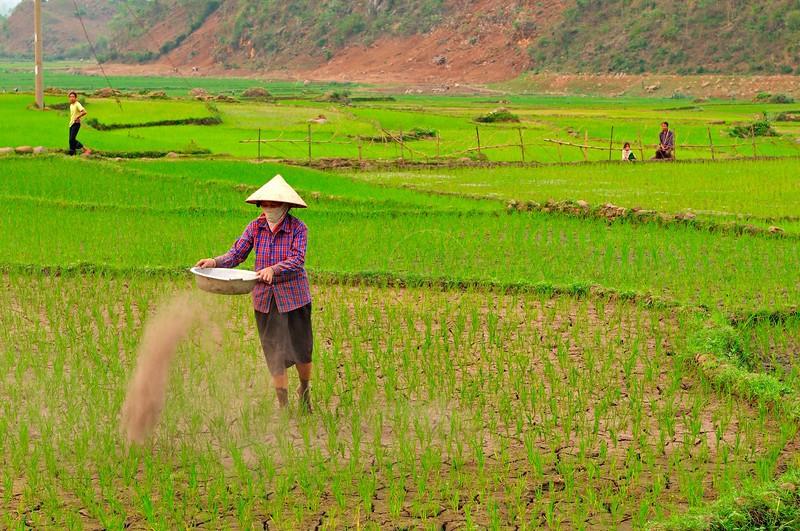 AS_Vietnam_0000011097