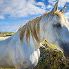 The Special Horse Photography 2 By Messagez com