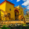 Best of Giraffe Fine Art Photography By Messagez com