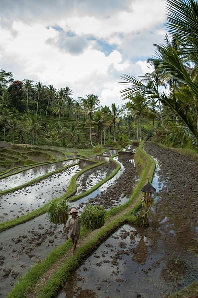 Bali_994.jpg