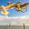 Original Animal Synchronicity Photography 17 By Messagez com