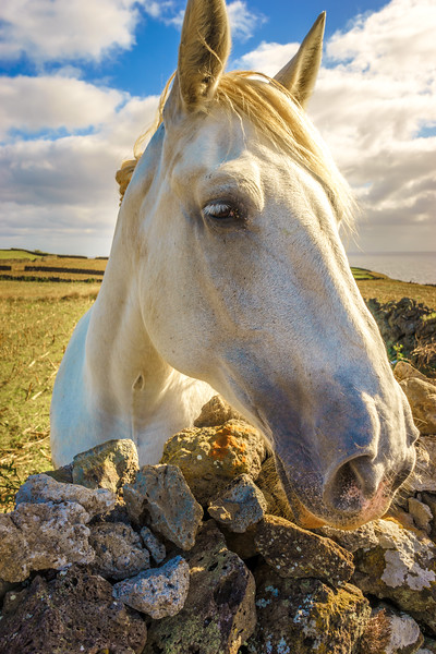 The Special Horse Photography By Messagez com