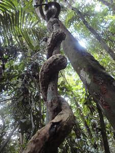 Cuyabeno, Amazon, Ecuador