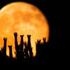Special Super Orange Moon Photography By Messagez com